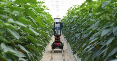 L'M2M e il futuro di un'agricoltura smart e sostenibile